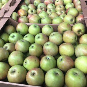 Яблоки Джонапринц 1 сорт оптом
