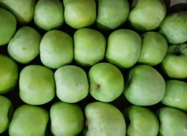 Яблоки Симиренко 1 сорт
