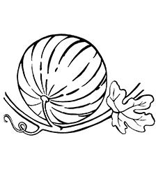 арбузы-оптом-от-производителя