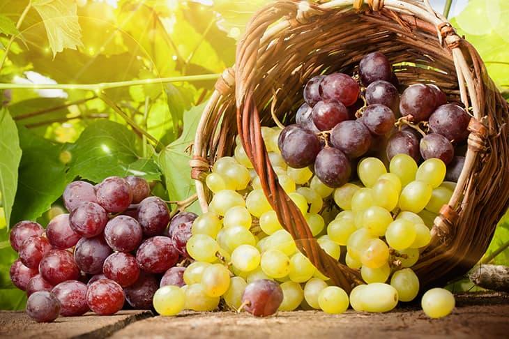 виноград-оптом-доставка-по-россии
