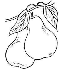 груши-оптом