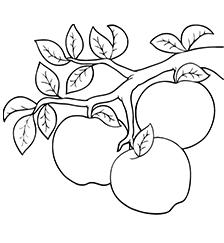 яблоки-оптом-от-производителя