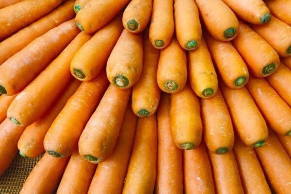 морковь-абако-оптом-от-производителя