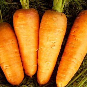 морковь-болтекс-оптом-от-производителя