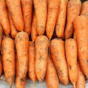 морковь-кордоба-оптом-от-производителя