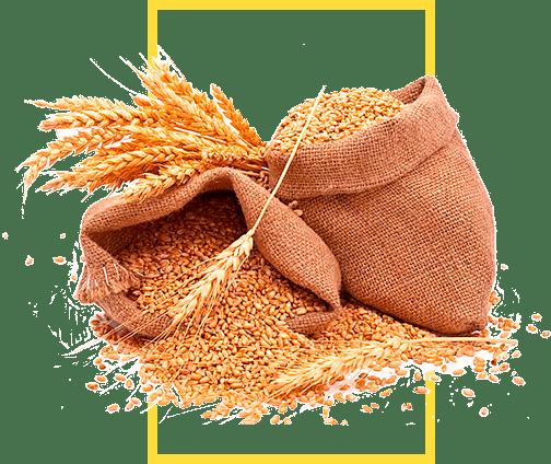 семена-оптом-ростагроэкспорт