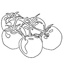 томаты-оптом-от-производителя