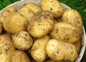 картофель-гала