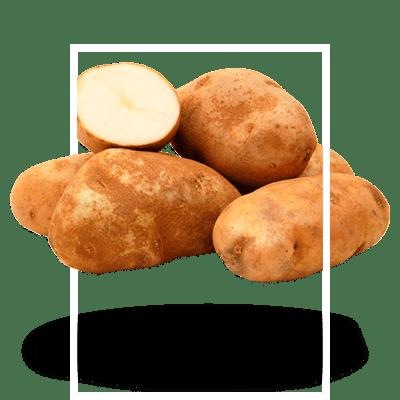 картофель-кормовой