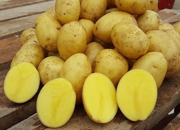 картофель-королева-анна
