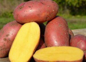 картофель-лаура