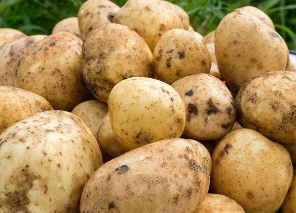 картофель-санте