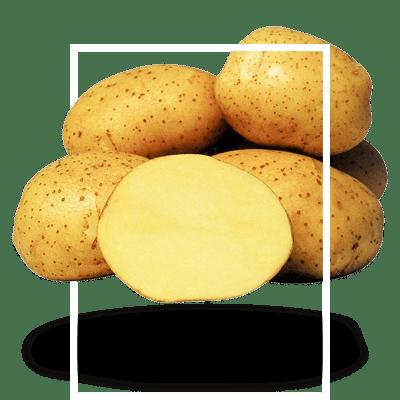 картофель-столовый