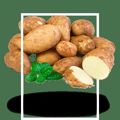 картофель-технический