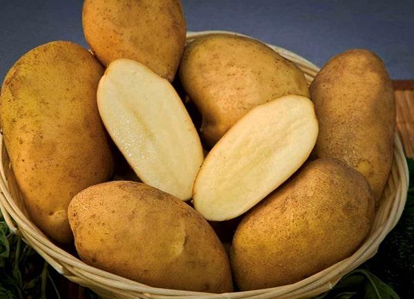 картофель-удача