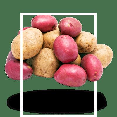 картофель-универсальный