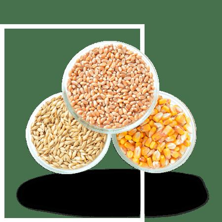семена-зерновые-оптом
