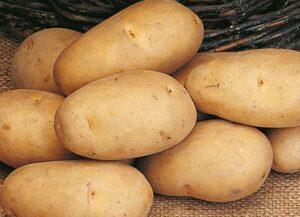 картофель-невский