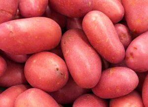 картофель-ред-скарлет