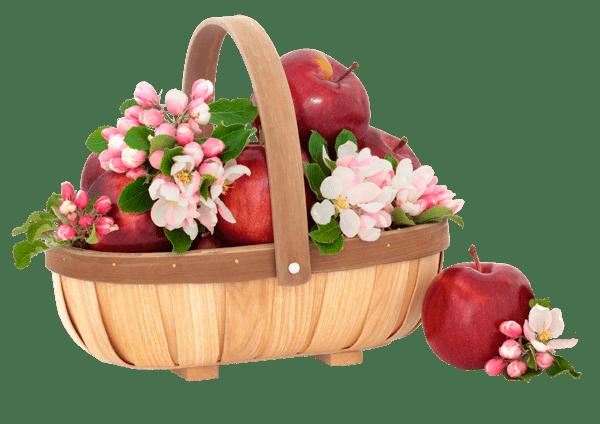 продам-яблоневый-сад