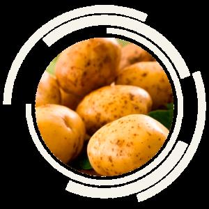 картофель-оптом
