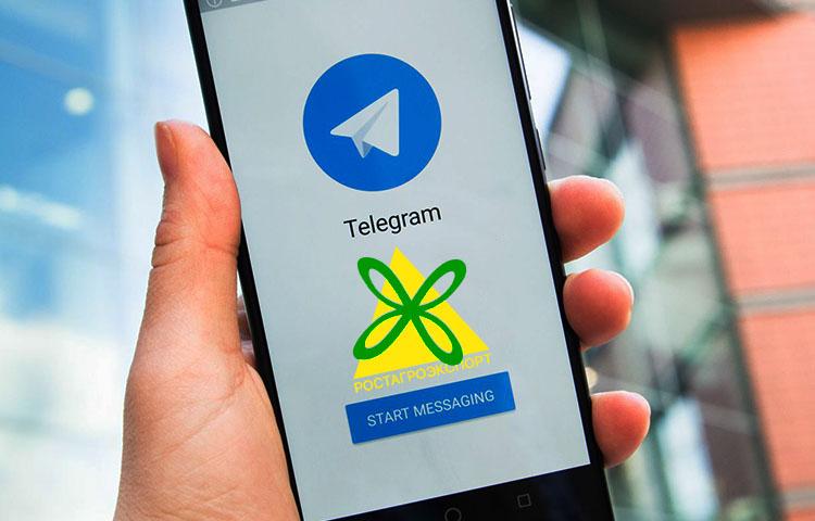 телеграм-ростагроэкспорт-@rostagroexp