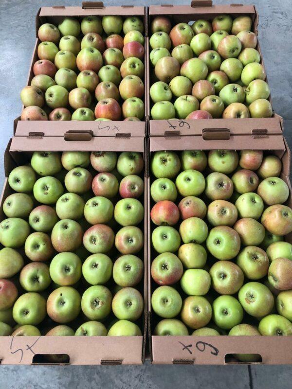 яблоки оптом 2 сорт