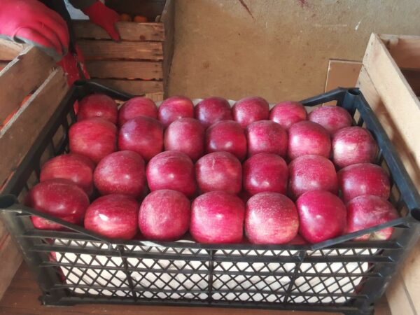 Яблоки оптом Кехура Грузия